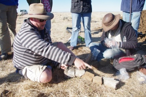 Palaeontologist Scott Hocknull examines a newly unearthed femur